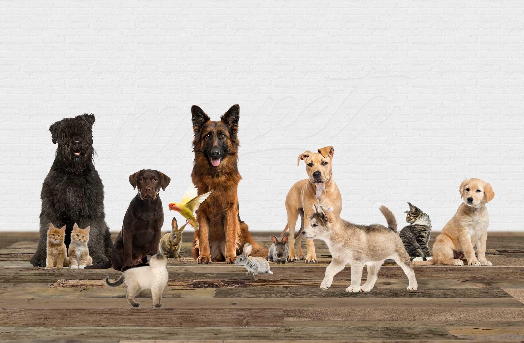 © ma-veto.fr | Cabinet vétérinaire à La Bouëxière